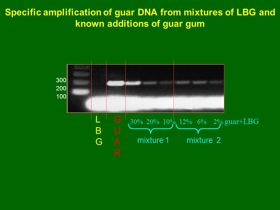 Specific amplification of guar DNA from mixtures of LBG and known additions of guar gum 100 200 300 30% 20% 10% 12% 6% 2% guar+LBG mixture 1 mixture 2