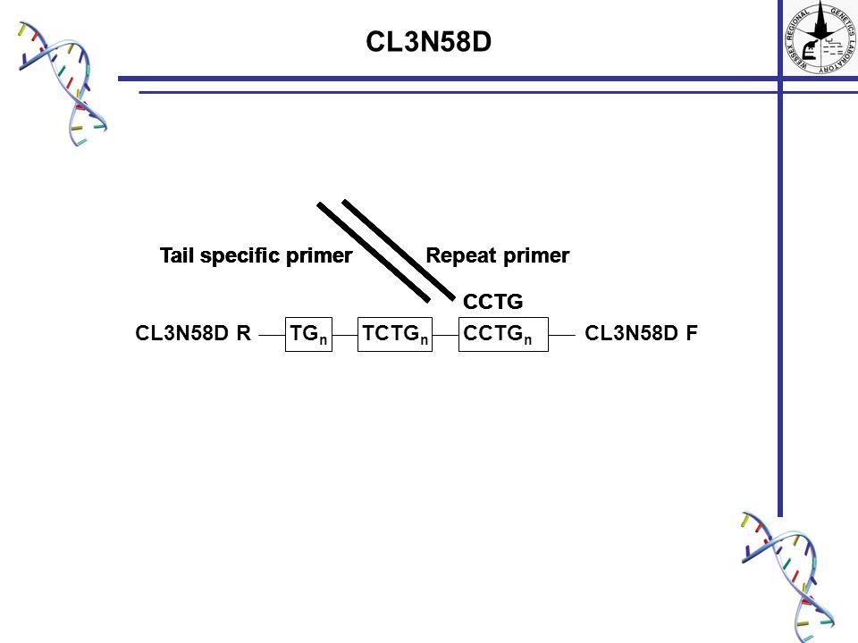 CL3N58D TG n TCTG n CCTG n CL3N58D FCL3N58D R Repeat primer CCTG Tail specific primer CCTG Tail specific primerRepeat primerTail specific primer CCTG Tail specific primerRepeat primerTail specific primer CCTG
