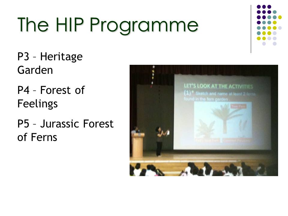P3 – Heritage Garden P4 – Forest of Feelings P5 – Jurassic Forest of Ferns The HIP Programme