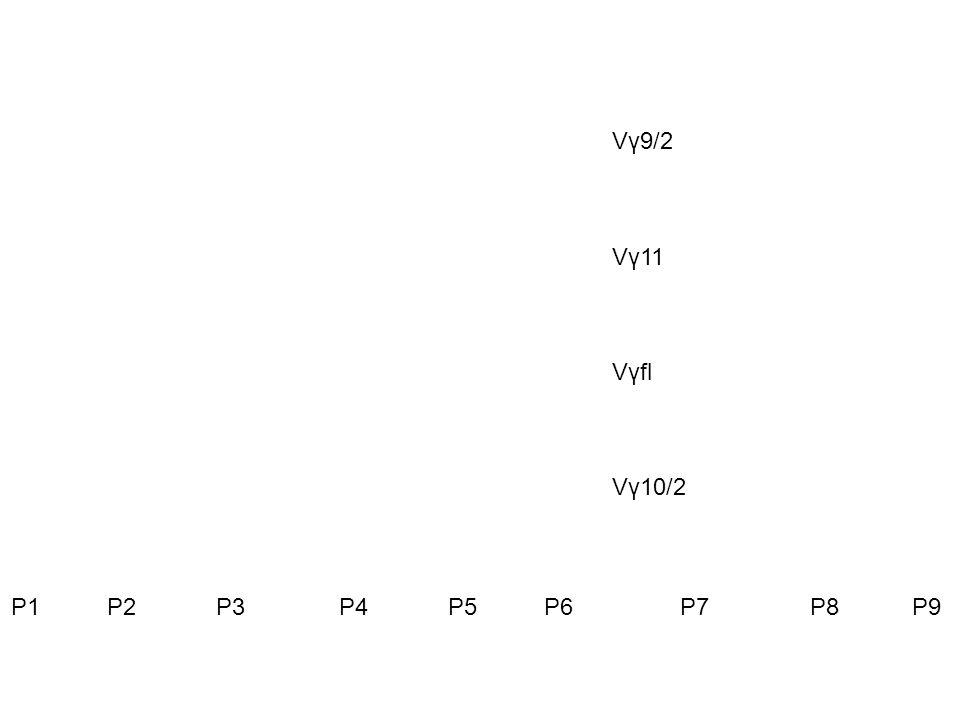 P1 P2 P3 P4 P5 P6 P7 P8 P9 Vγ9/2 Vγ11 Vγfl Vγ10/2