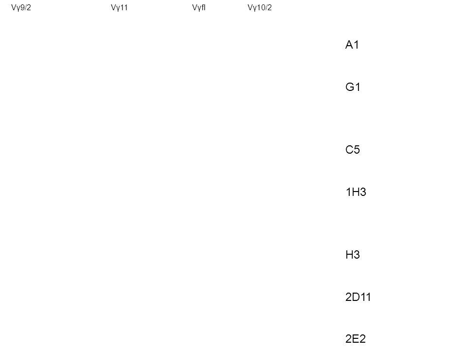 A1 G1 C5 1H3 H3 2D11 2E2 Vγ9/2Vγ11VγflVγ10/2