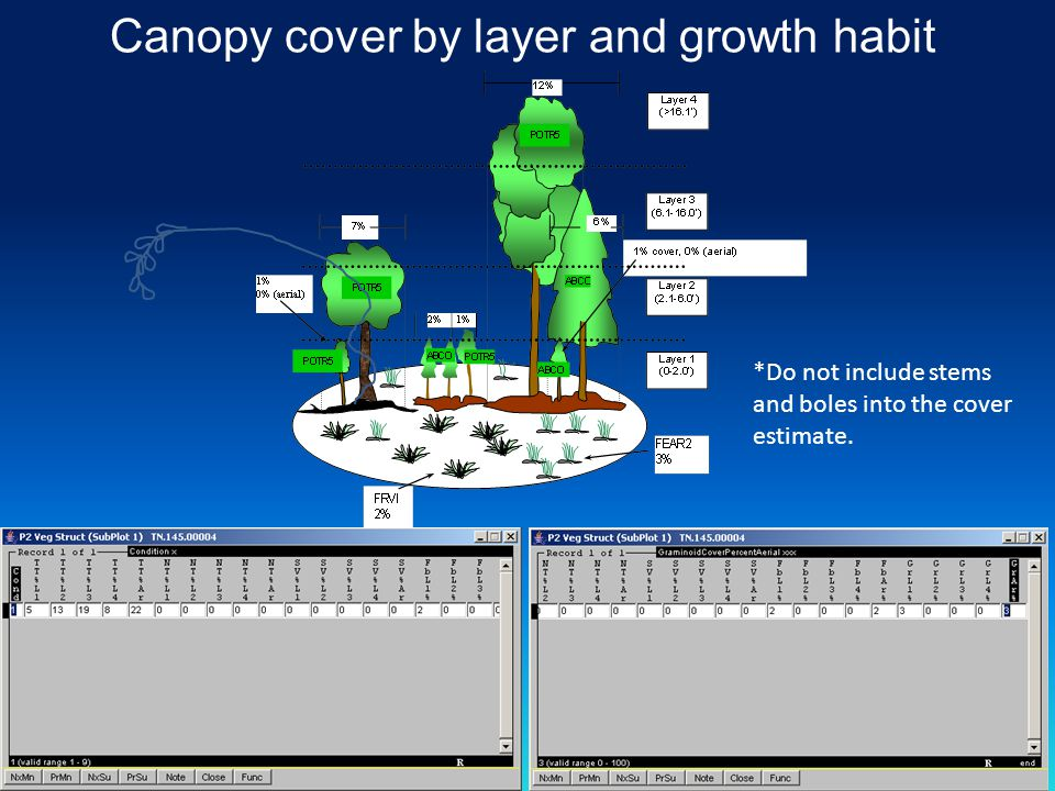 Canopy cover by layer and growth habit *Do not include stems and boles into the cover estimate.