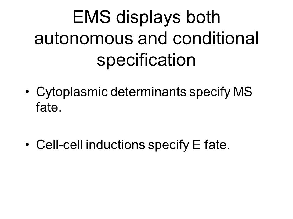 EMS displays both autonomous and conditional specification Cytoplasmic determinants specify MS fate.