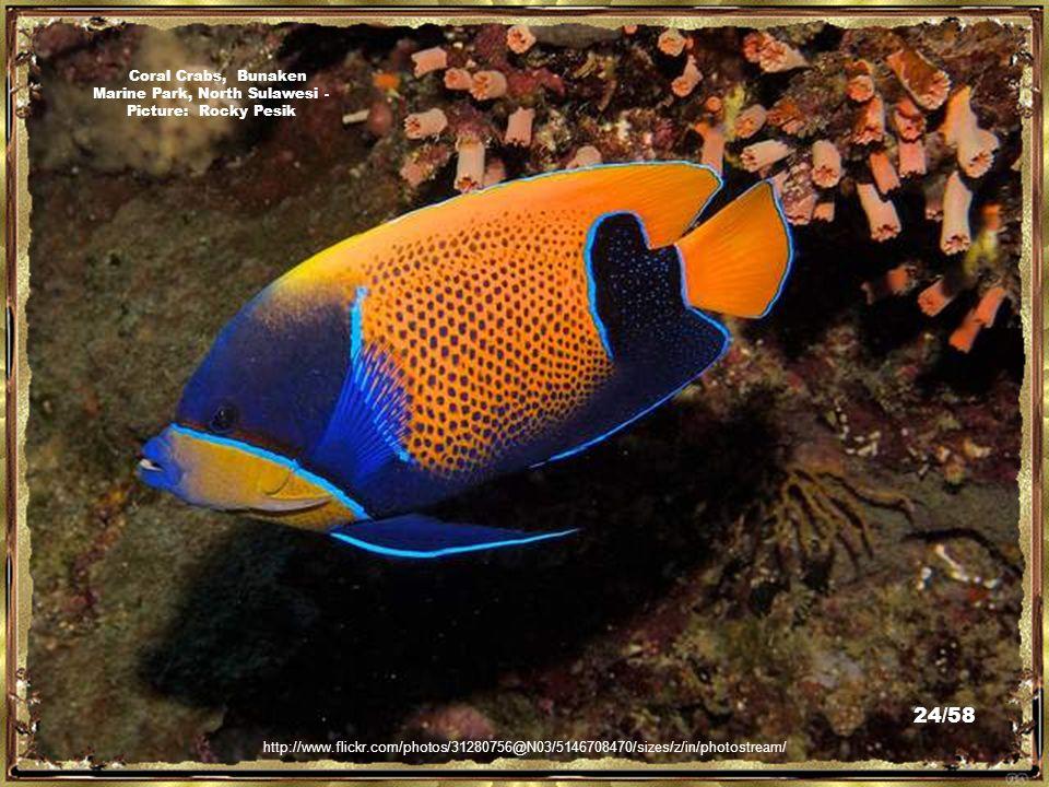 http://commons.wikimedia.org/wiki/File:Bunaken3.jpg Bunaken Marine Park, North Sulawesi - Picture: Borgx 23/58