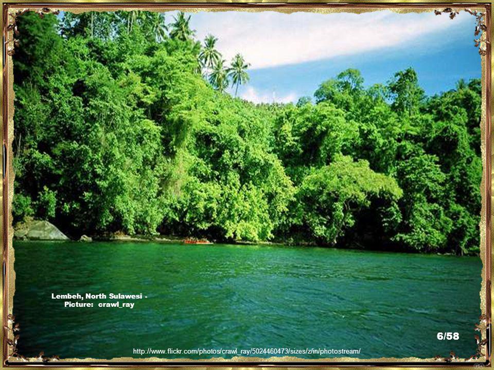 http://www.flickr.com/photos/vikingkarwur/2315476046/ Tangkoko, Sulawesi Utara - Picture: Viking Karwar 5/58