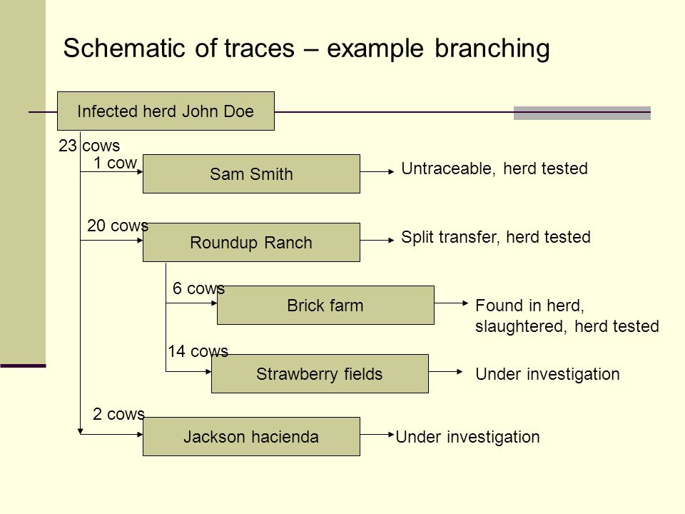 Schematic of traces – example branching Infected herd John Doe Sam Smith Roundup Ranch Jackson hacienda Brick farm Strawberry fields 23 cows 1 cow 20