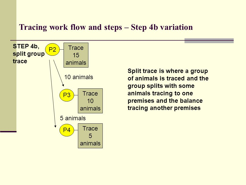 Trace 15 animals P2 STEP 4b, split group trace Tracing work flow and steps – Step 4b variation Trace 10 animals P3 10 animals Trace 5 animals P4 5 ani