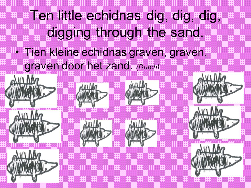 Ten little echidnas dig, dig, dig, digging through the sand.
