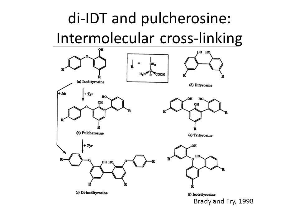 Brady and Fry, 1998 di-IDT and pulcherosine: Intermolecular cross-linking