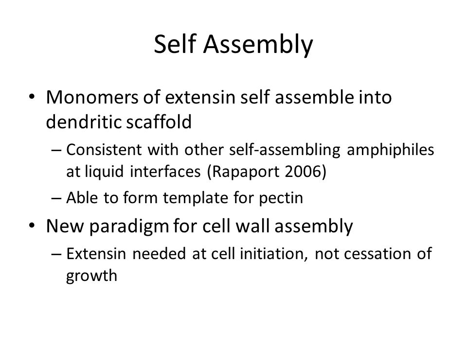 Self Assembly Monomers of extensin self assemble into dendritic scaffold – Consistent with other self-assembling amphiphiles at liquid interfaces (Rapaport 2006) – Able to form template for pectin New paradigm for cell wall assembly – Extensin needed at cell initiation, not cessation of growth