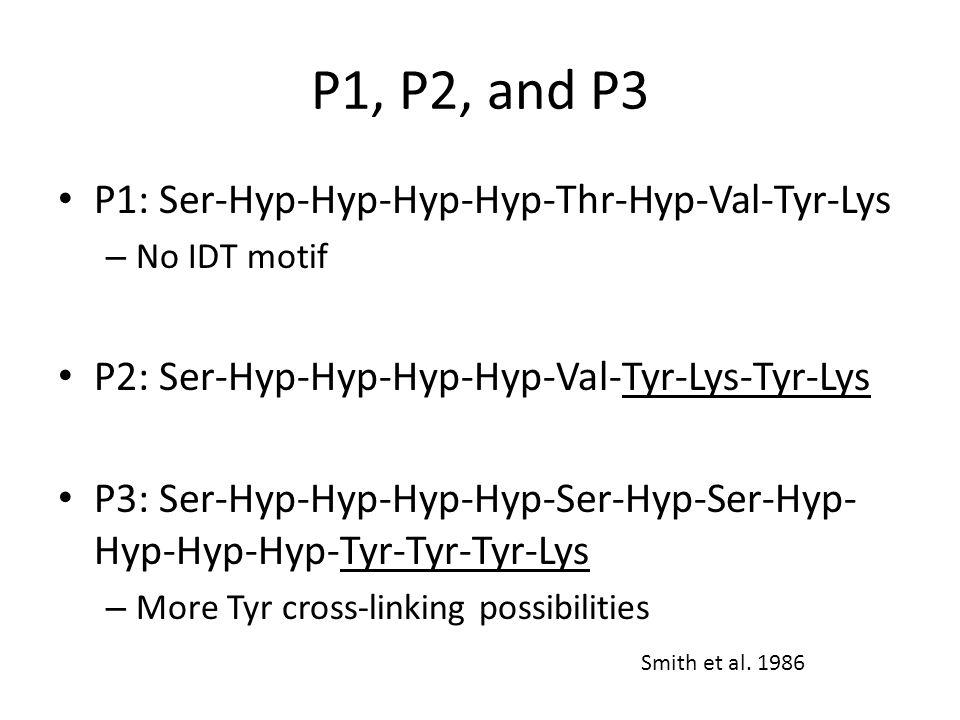 P1, P2, and P3 P1: Ser-Hyp-Hyp-Hyp-Hyp-Thr-Hyp-Val-Tyr-Lys – No IDT motif P2: Ser-Hyp-Hyp-Hyp-Hyp-Val-Tyr-Lys-Tyr-Lys P3: Ser-Hyp-Hyp-Hyp-Hyp-Ser-Hyp-Ser-Hyp- Hyp-Hyp-Hyp-Tyr-Tyr-Tyr-Lys – More Tyr cross-linking possibilities Smith et al.