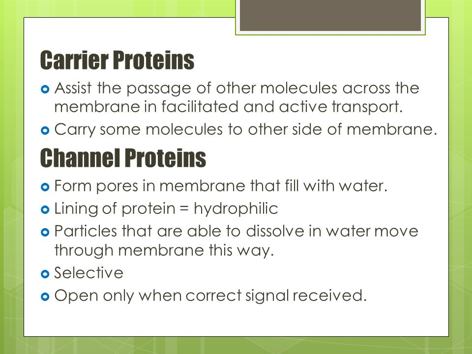 Carrier Proteins  Assist the passage of other molecules across the membrane in facilitated and active transport.