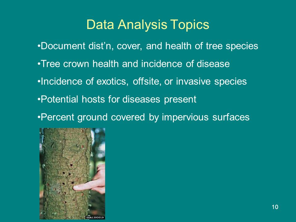 Data Analysis Topics Document dist'n, cover, and health of tree species Tree crown health and incidence of disease Incidence of exotics, offsite, or invasive species Potential hosts for diseases present Percent ground covered by impervious surfaces 10