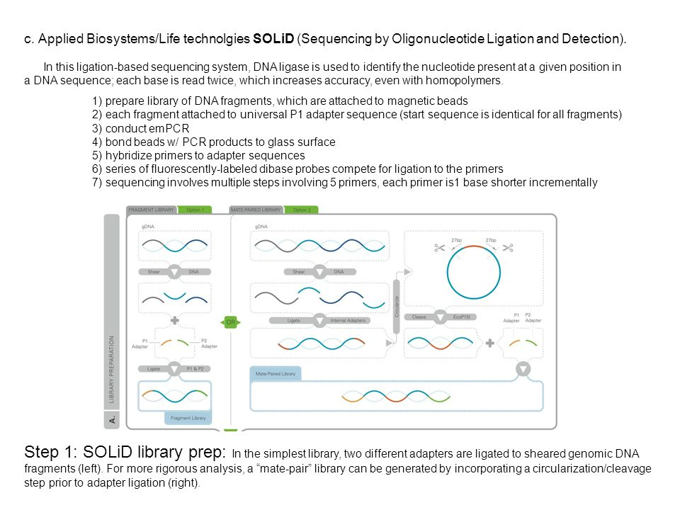 c. Applied Biosystems/Life technolgies SOLiD (Sequencing by Oligonucleotide Ligation and Detection). In this ligation-based sequencing system, DNA lig