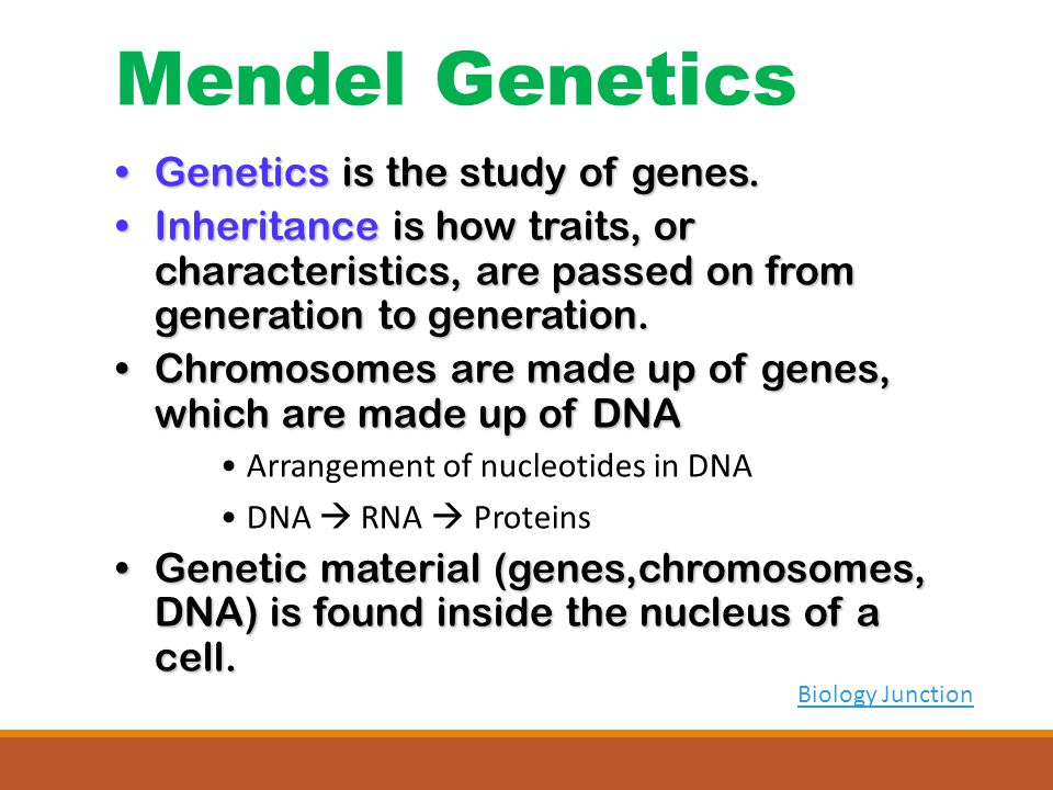 Biology Junction Genetics is the study of genes.Genetics is the study of genes.