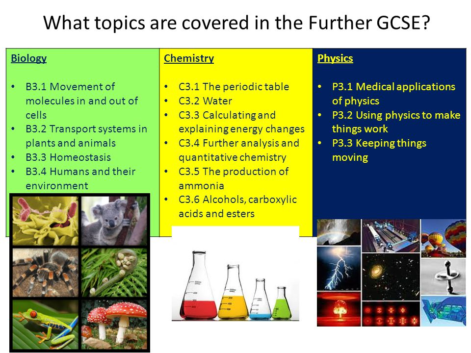 What topics are covered in the Further GCSE? Biology B3.1 Movement of molecules in and out of cells B3.2 Transport systems in plants and animals B3.3