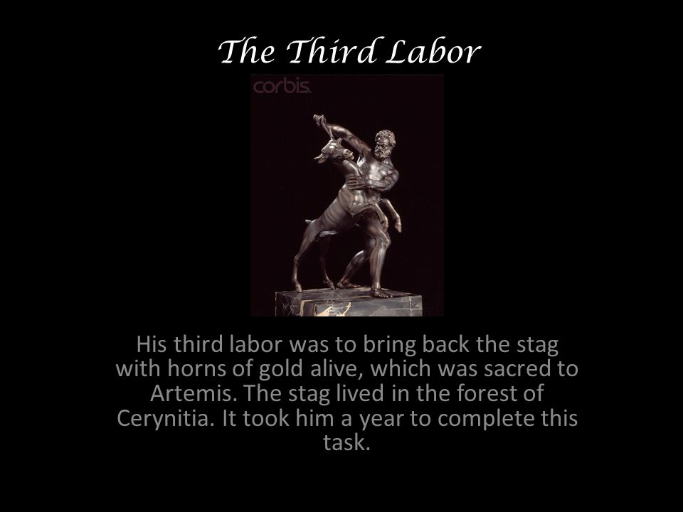 The Third Labor His third labor was to bring back the stag with horns of gold alive, which was sacred to Artemis.