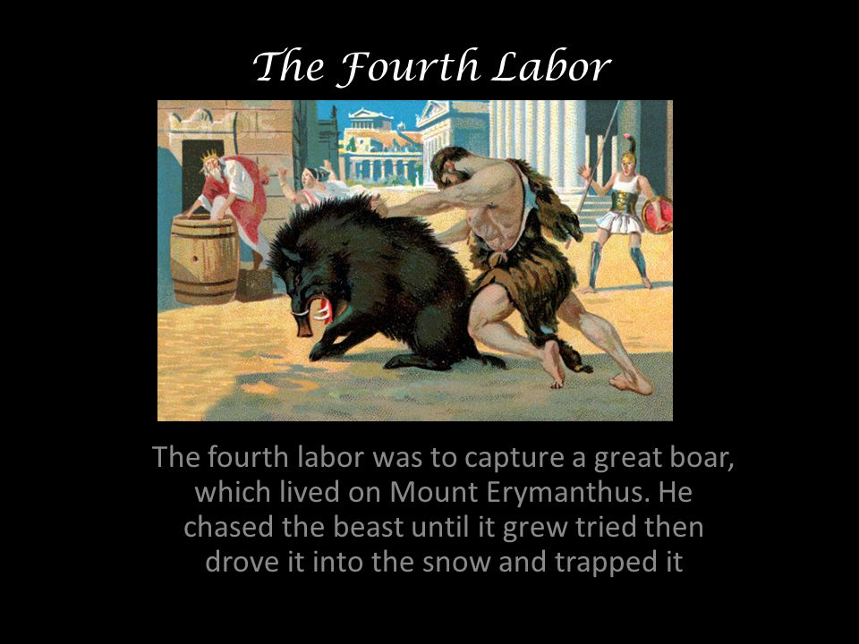 The Fourth Labor The fourth labor was to capture a great boar, which lived on Mount Erymanthus.