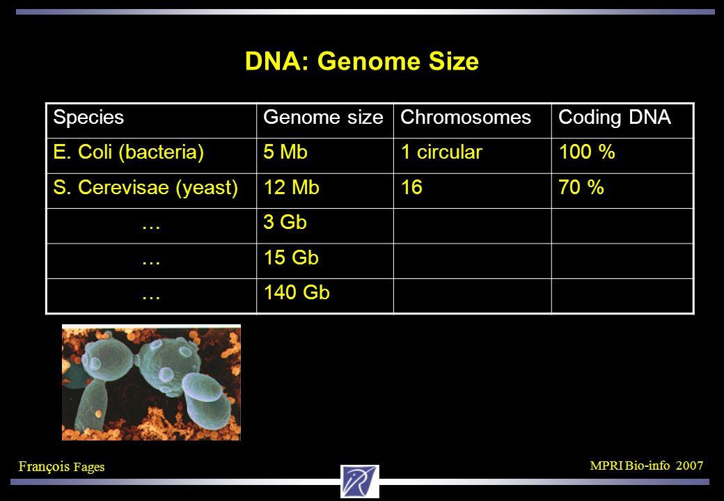 François Fages MPRI Bio-info 2007 DNA: Genome Size SpeciesGenome sizeChromosomesCoding DNA E.