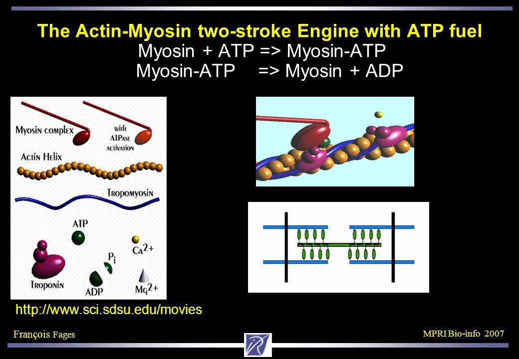 François Fages MPRI Bio-info 2007 The Actin-Myosin two-stroke Engine with ATP fuel Myosin + ATP => Myosin-ATP Myosin-ATP => Myosin + ADP http://www.sci.sdsu.edu/movies