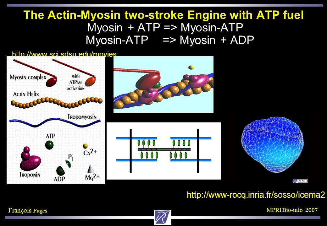 François Fages MPRI Bio-info 2007 The Actin-Myosin two-stroke Engine with ATP fuel Myosin + ATP => Myosin-ATP Myosin-ATP => Myosin + ADP http://www.sci.sdsu.edu/movies http://www-rocq.inria.fr/sosso/icema2