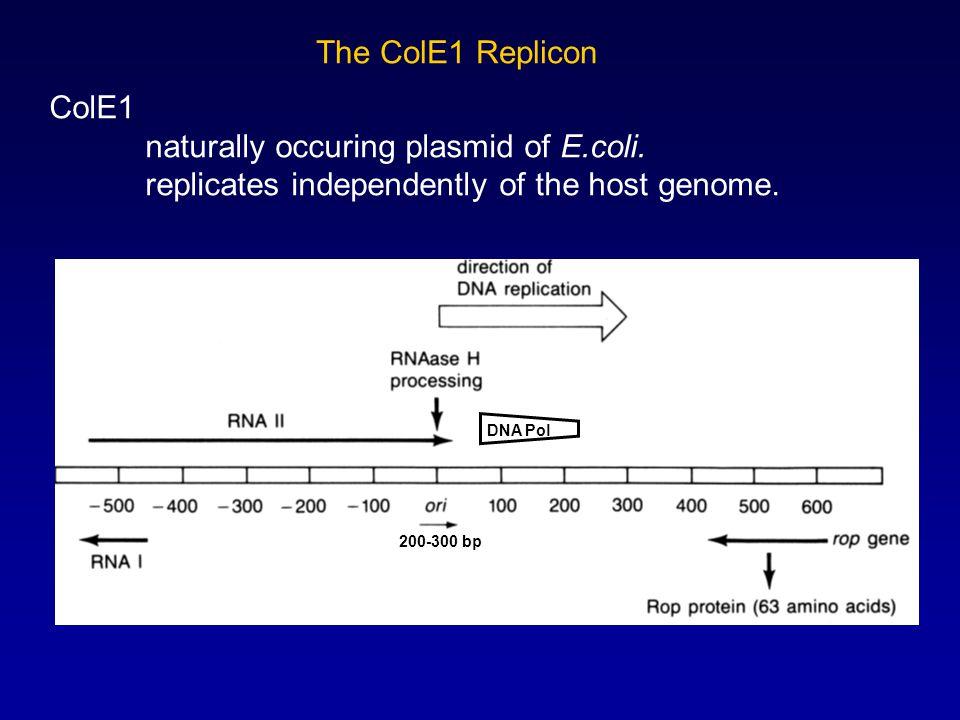 The ColE1 Replicon ColE1 naturally occuring plasmid of E.coli.