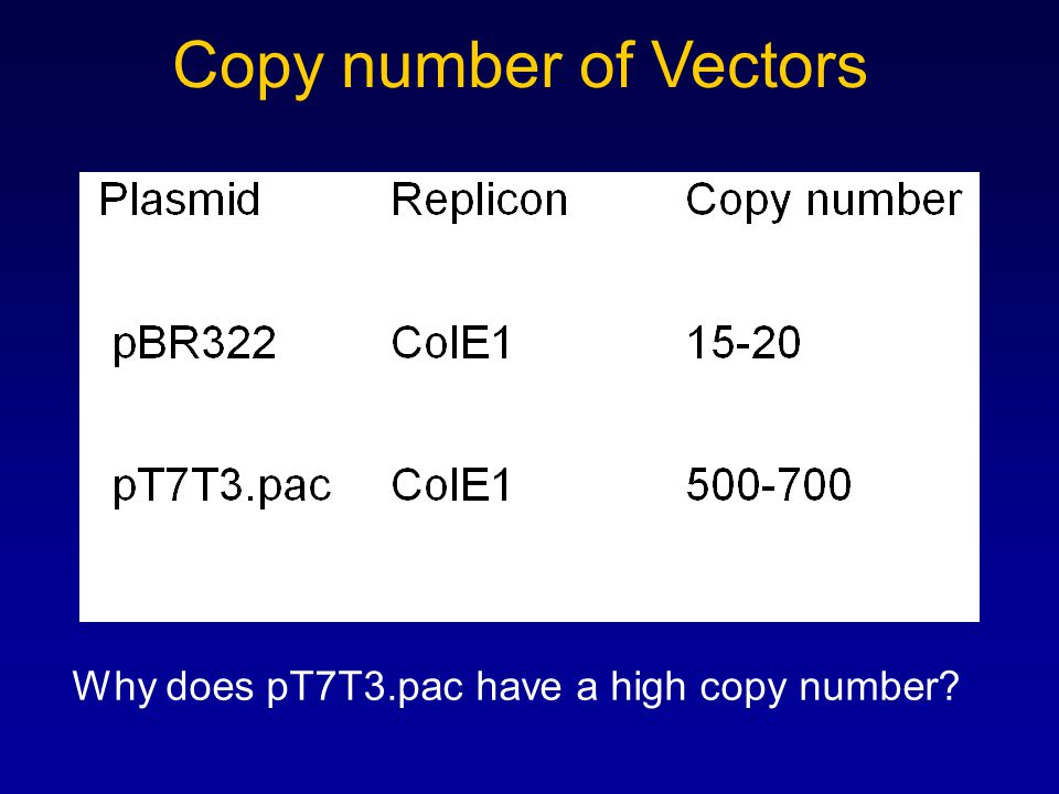 Copy number of Vectors Why does pT7T3.pac have a high copy number?