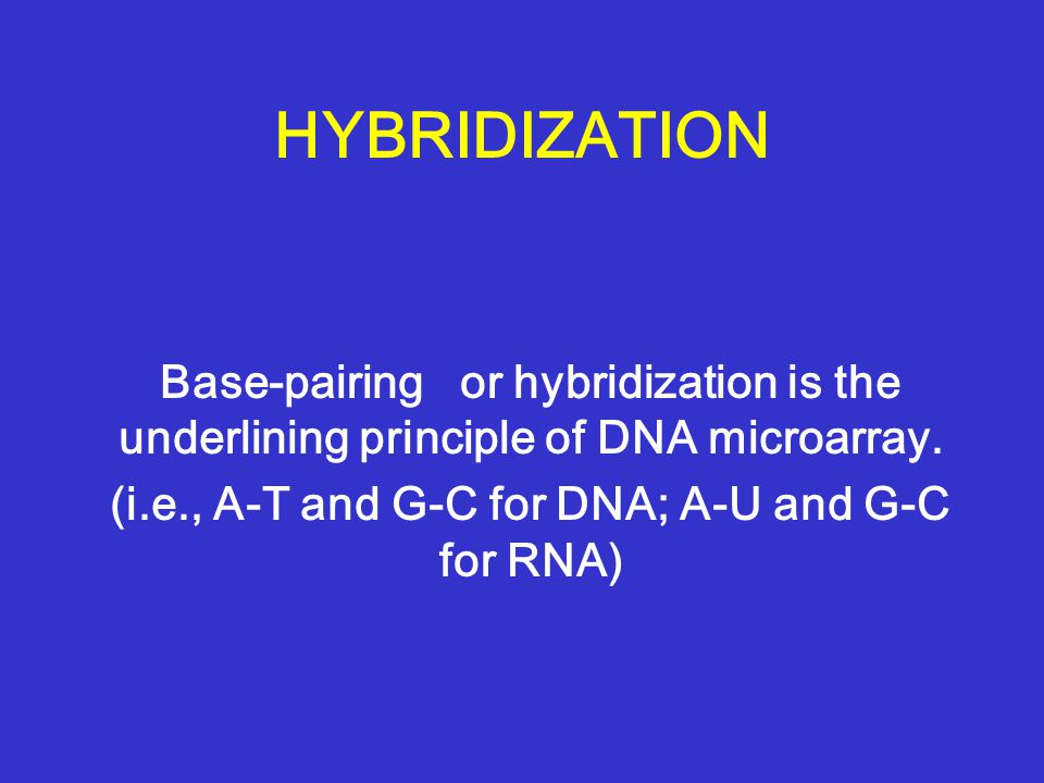 HYBRIDIZATION Base-pairing or hybridization is the underlining principle of DNA microarray.
