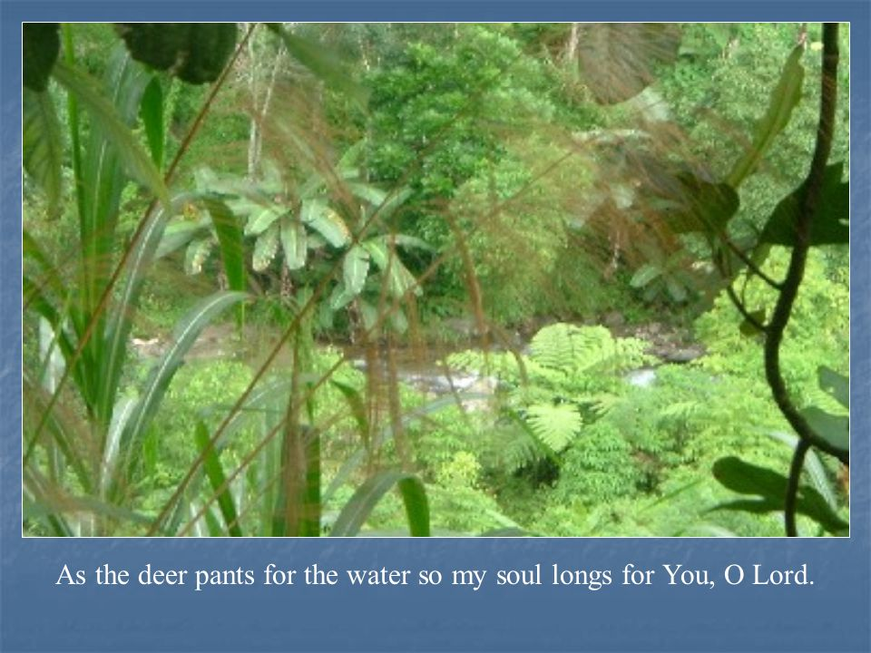 As the deer pants for the water so my soul longs for You, O Lord.