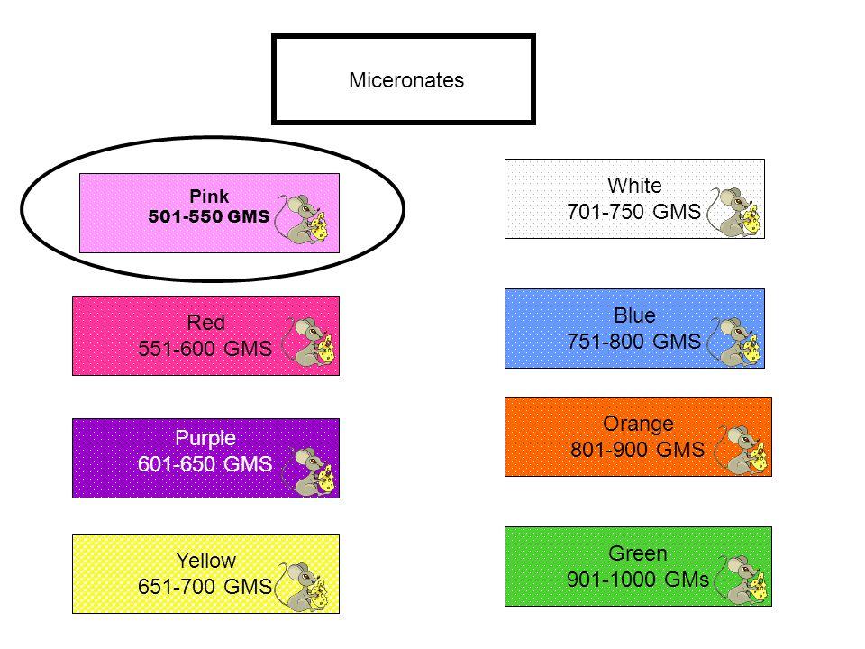 Miceronates Pink 501-550 GMS Red 551-600 GMS Blue 751-800 GMS Purple 601-650 GMS Yellow 651-700 GMS White 701-750 GMS Orange 801-900 GMS Green 901-100
