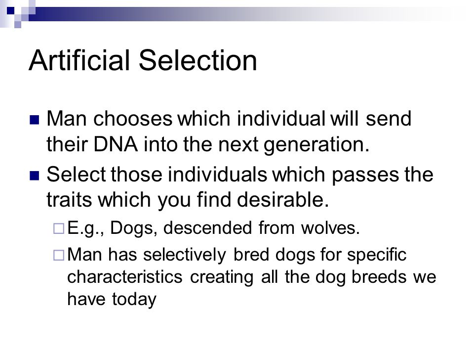 Artificial Selection Man chooses which individual will send their DNA into the next generation.