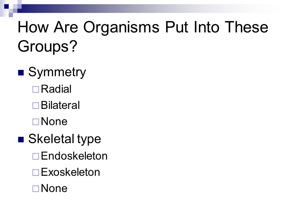 How Are Organisms Put Into These Groups.