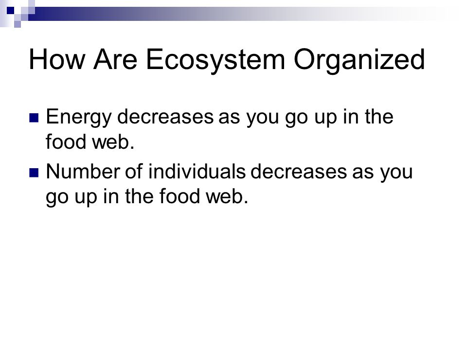How Are Ecosystem Organized Energy decreases as you go up in the food web.