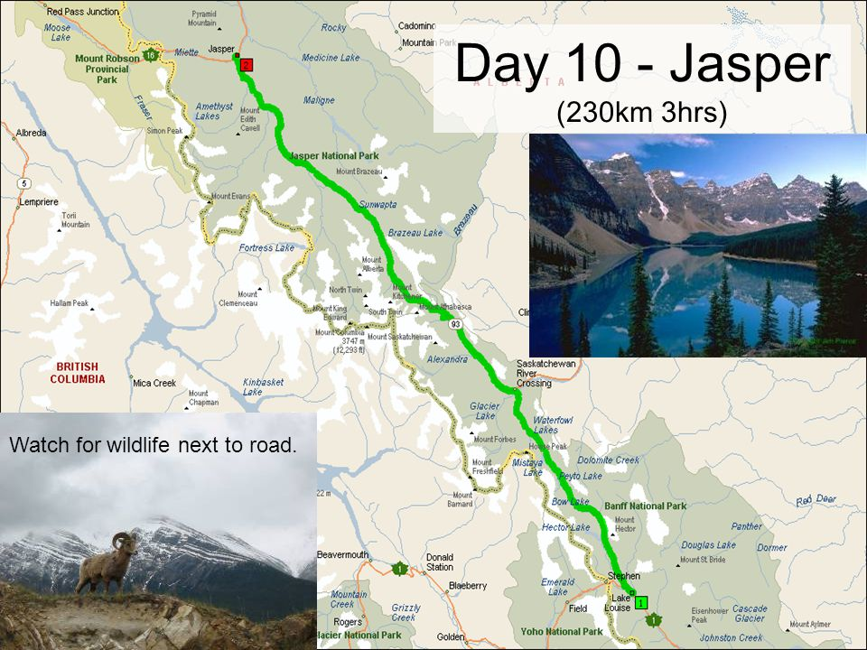 Day 10 - Jasper (230km 3hrs) Watch for wildlife next to road.