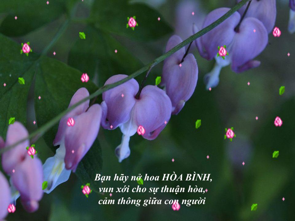 Bạn hãy nở hoa THA THỨ, để lòng được thanh thản, vui tươi