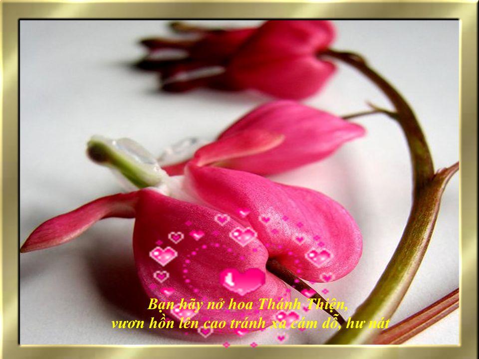 Bạn hãy nở hoa CHÂN THẬT, để loại bỏ dối trá, gian tà, mãi có niềm tin nơi nhau Bạn hãy nở hoa CÔNG CHÍNH, để thực hiện công bình, không tham lam bất chính