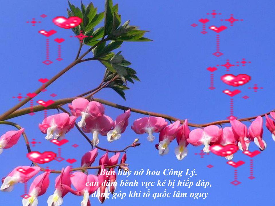Bạn hãy nở hoa ÁNH SÁNG, để bước ra khỏi tội lỗi và là gương lành cho người khác