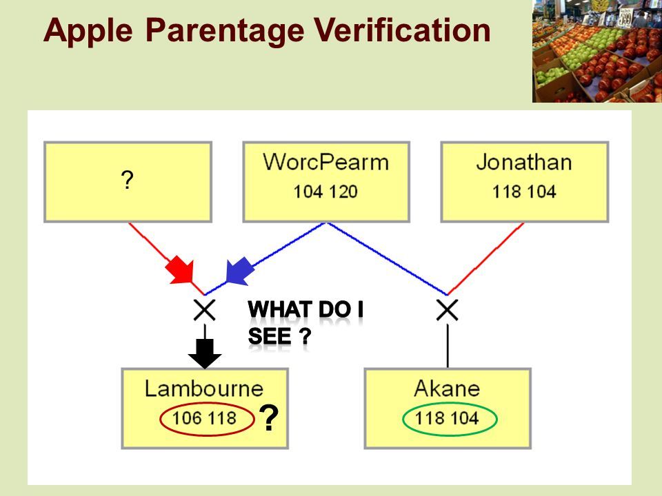 Apple Parentage Verification