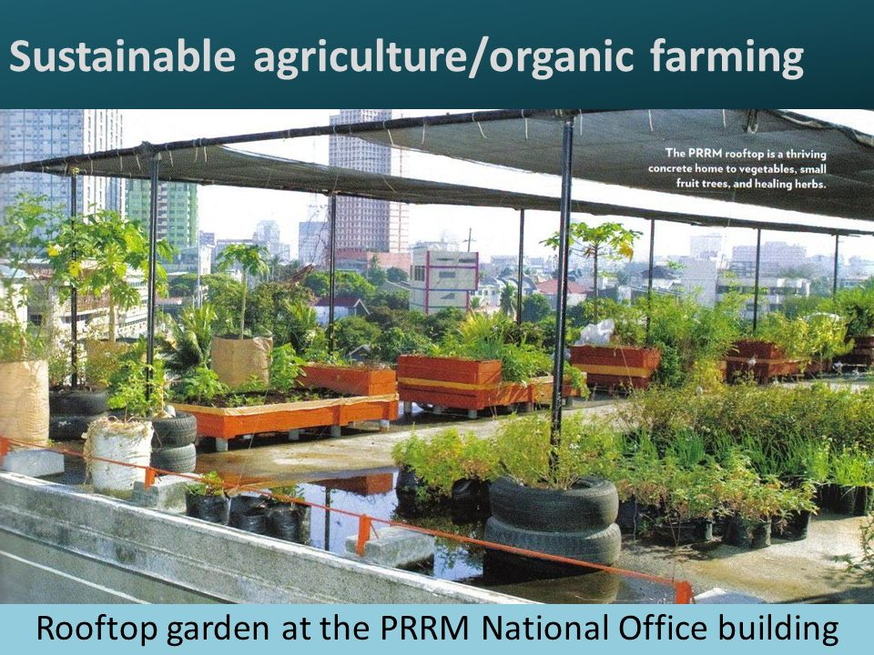 Sustainable agriculture/organic farming Rooftop garden at the PRRM National Office building