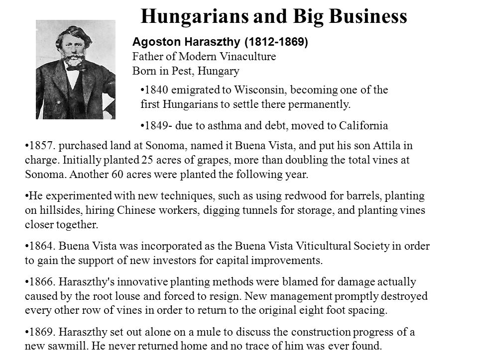 Hungarians and Big Business Agoston Haraszthy (1812-1869) Father of Modern Vinaculture Born in Pest, Hungary 1840 emigrated to Wisconsin, becoming one