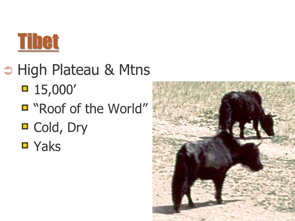 " High Plateau & Mtns 15,000' ""Roof of the World"" Cold, Dry Yaks"