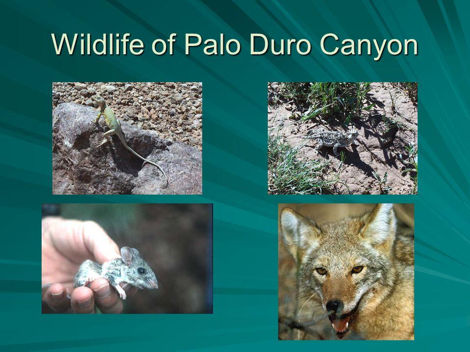 Wildlife of Palo Duro Canyon