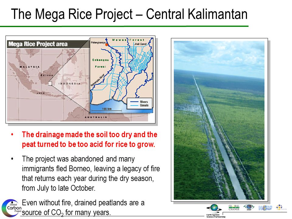 The Mega Rice Project – Central Kalimantan The drainage made the soil too dry and the peat turned to be too acid for rice to grow. The project was aba