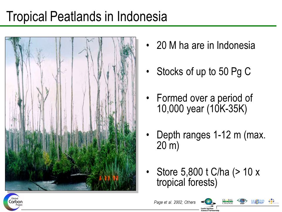 Tropical Peatlands in Indonesia 20 M ha are in Indonesia Stocks of up to 50 Pg C Formed over a period of 10,000 year (10K-35K) Depth ranges 1-12 m (ma