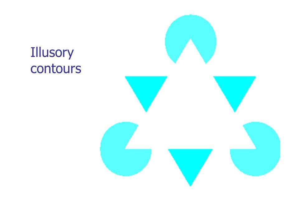 Illusory contours