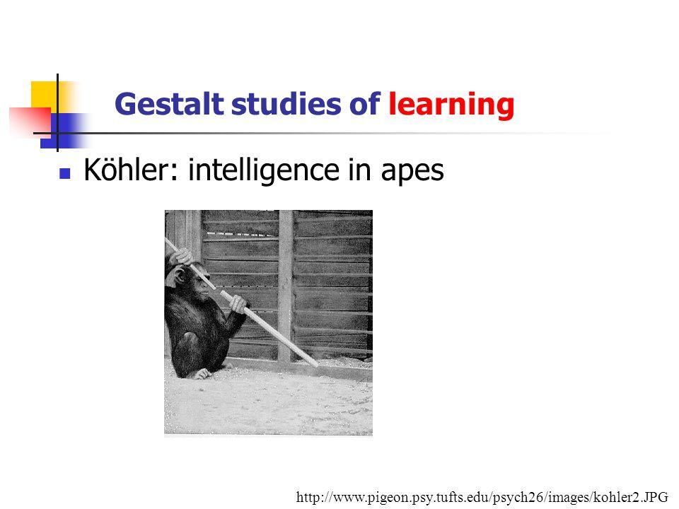 Gestalt studies of learning Köhler: intelligence in apes http://www.pigeon.psy.tufts.edu/psych26/images/kohler2.JPG