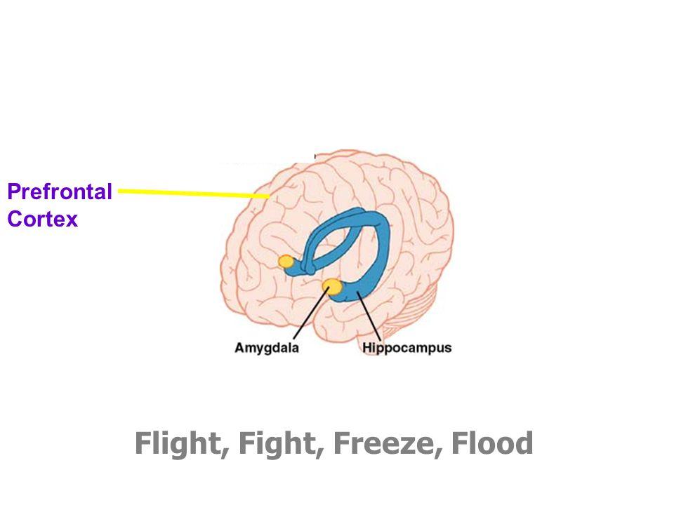 Flight, Fight, Freeze, Flood Prefrontal Cortex