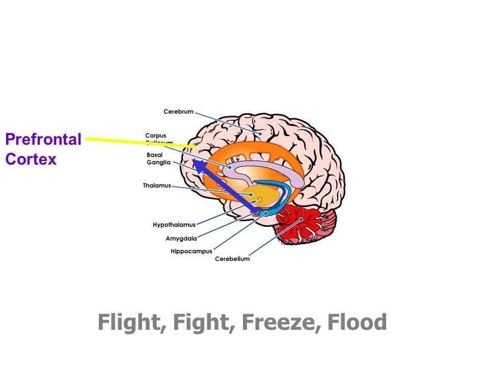 Flight, Fight, Freeze, Flood