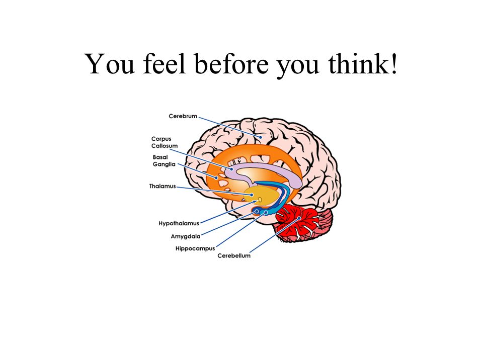You feel before you think!