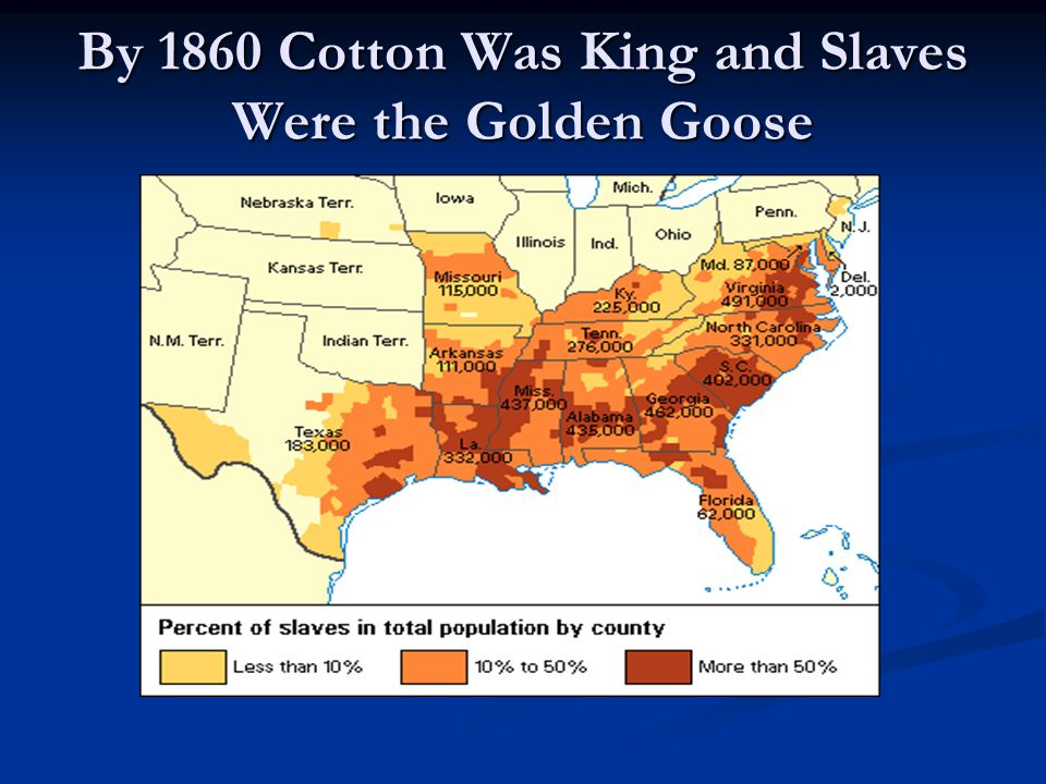 By 1860 Cotton Was King and Slaves Were the Golden Goose